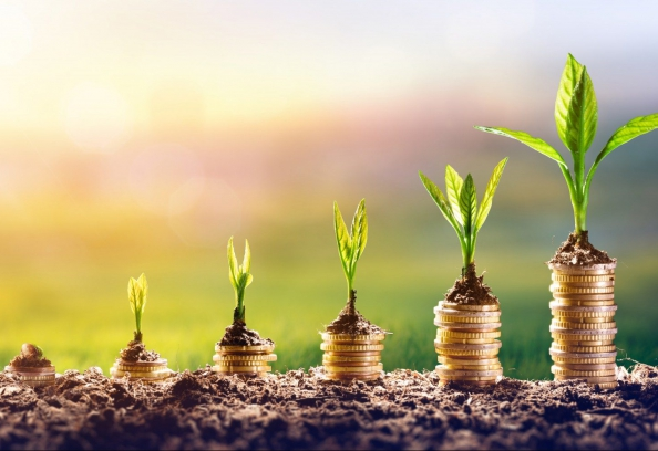 Plant On Coins Finance And Investment Concept