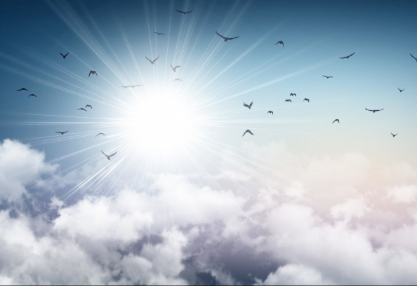 Stormy sky, sunlight and birds flying away